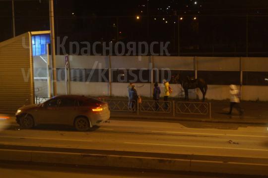 НаСвободном конь попал под колеса иномарки