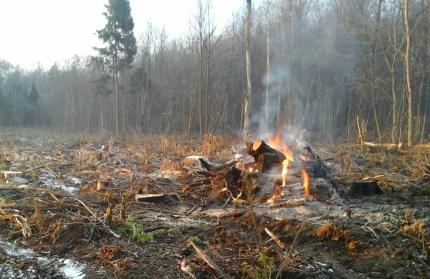 Первопричиной первого в2015г. лесного пожара стал поджог