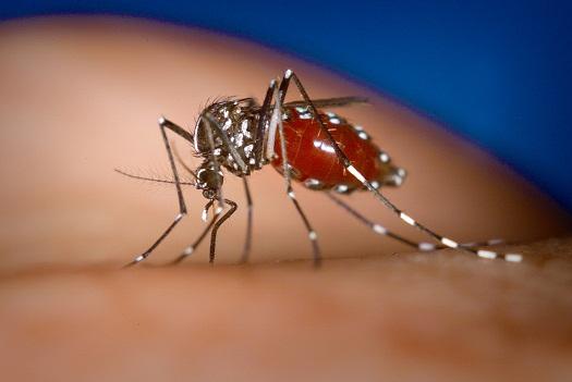 ВТаиланде из-за лихорадки денге скончался гражданин Барнаула